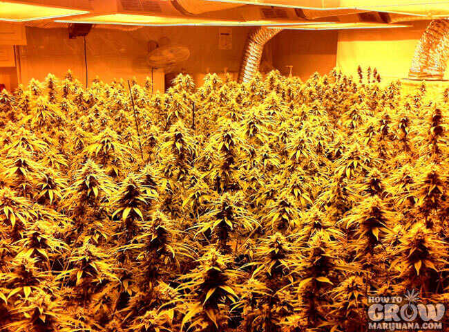 Grow Light Rails Increase Your Yield