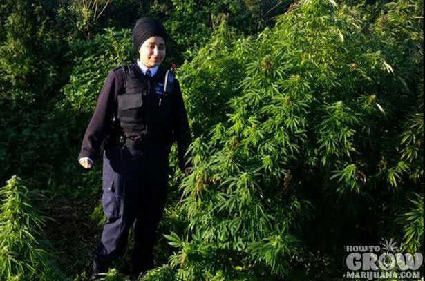 Forest Sized Cannabis Grow Busted