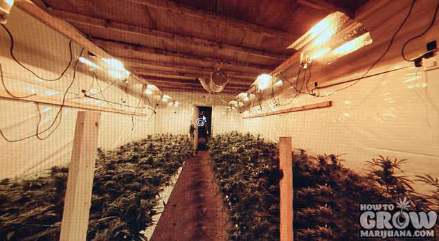 Underground Stealth Marijuana Grow Room