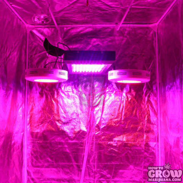 450W G8LED Grow Light Dorm Grow