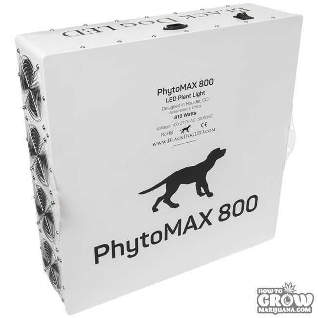 Black Dog Phytomax 800