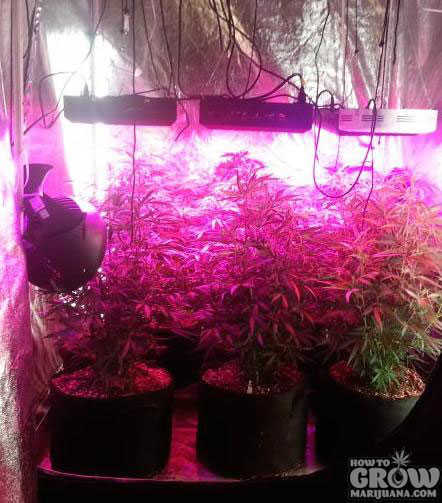 G8LED 450W Dorm Grow
