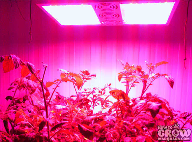 Growing Tomatoes with Solar Storm 440W