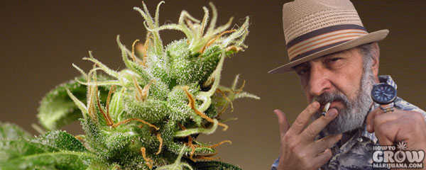Jack Herer, Marijuana and Man