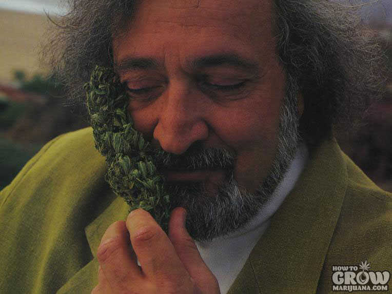 Jack Herer the Cannabis Emperor
