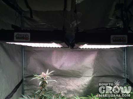 Super Grow LED Diary SK450