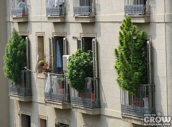 Apartment Window Growing Marijuana Indoors