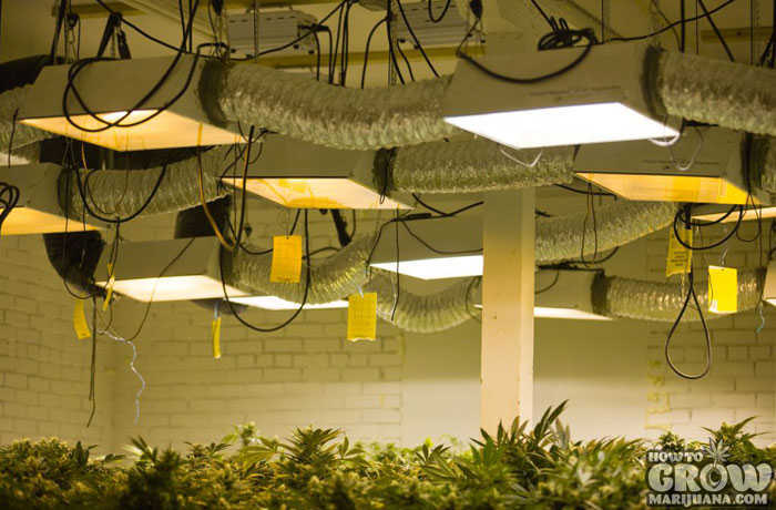 Energy Consumption for Growing Marijuana