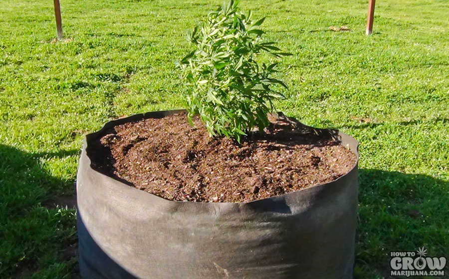 Smart Pots Vs Plastic Pots Vs Air Pots The Pros And Cons