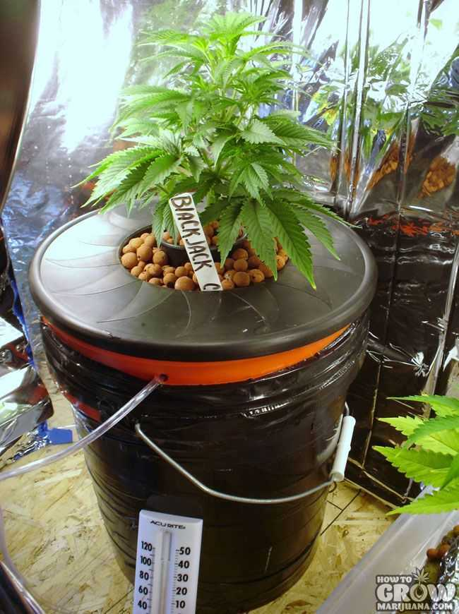 Hydroponic Growing Systems