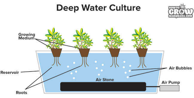 Deep Water Culture Diagram Marijuana