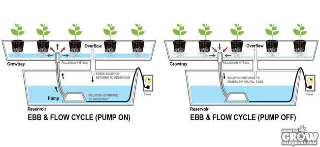 Ebb and Flow System for Marijuana