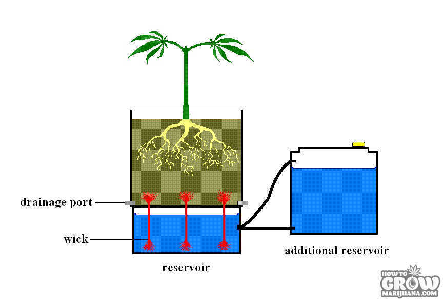 hydroponic marijuana wick system