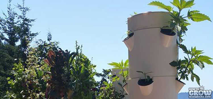 Tower Garden Aeroponics for Marijuana