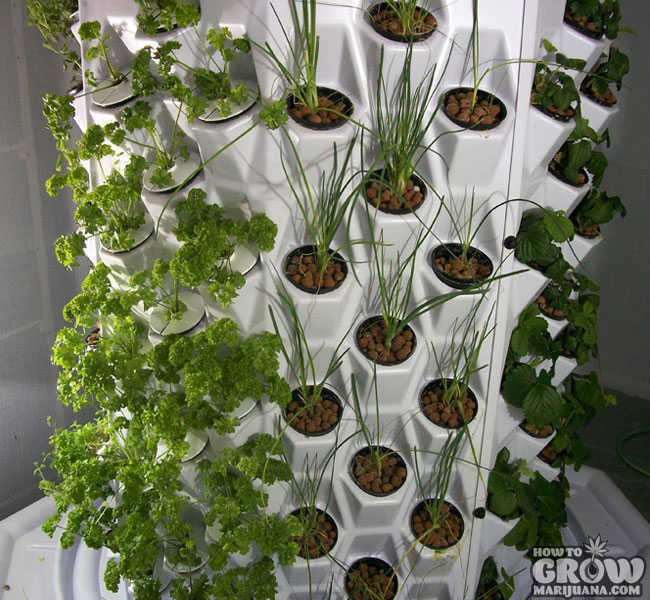 Veggies in Aerosystem