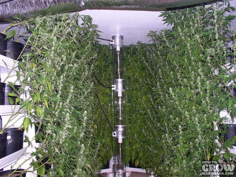 Vertical Aeroponics Grow