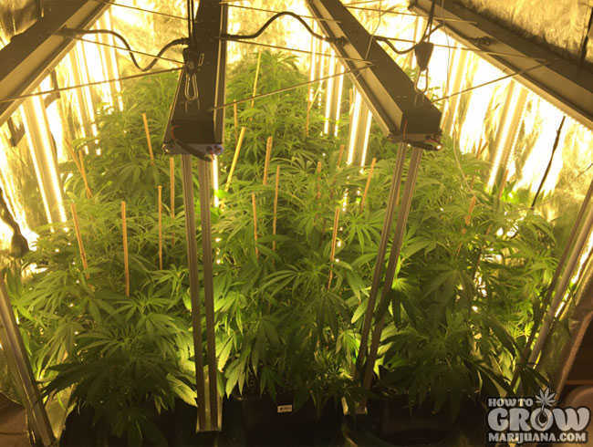 vertical led lights grow hydroponic systems vertically cylinder crop plants panel efficiency howtogrowmarijuana