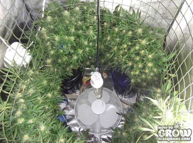 Vertical SCOG Grow