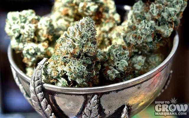 5 Brilliant Ways to Increase THC – Growing Marijuana at Home