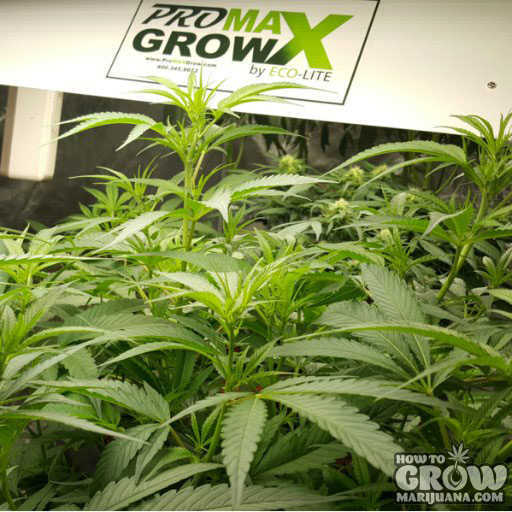 ProMaxGrow–MAX1200–250 Watts 4