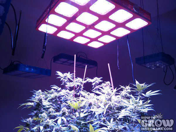 Truth Lighting – M16 – 760 Watts 4