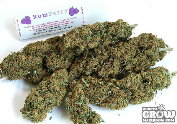 romberry-marijuana-buds