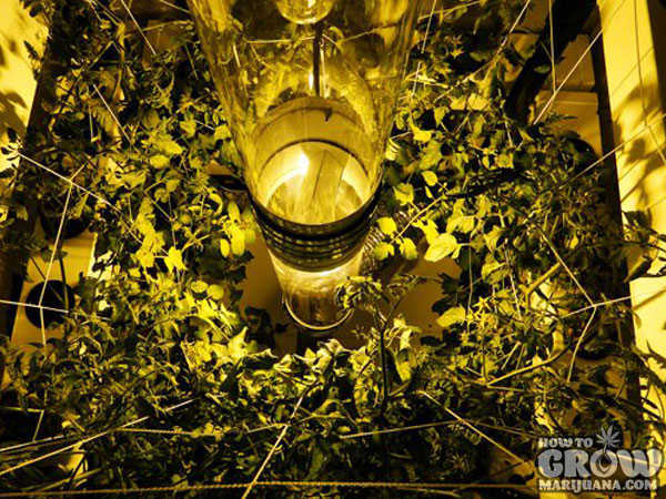 Inside Big Buddha Box Grow Room