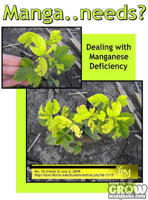 Manganese deficiency marijuana leaves