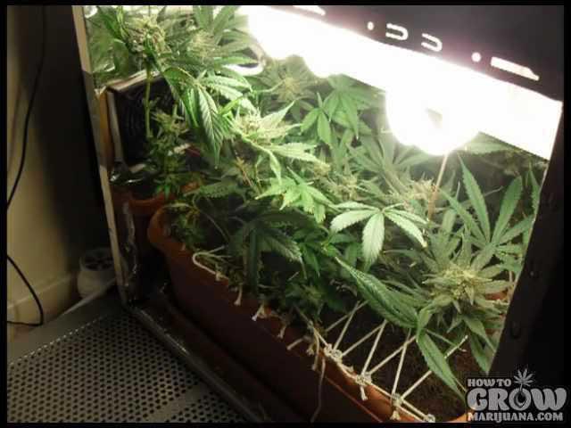 Stealth Grow Box