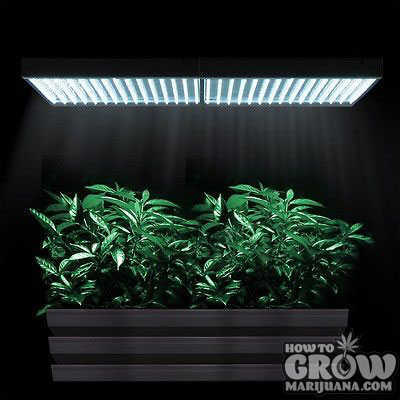 grow-box-lighting-stealth