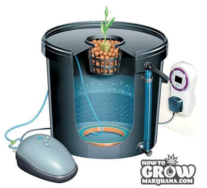 DWC-hydroponic-system
