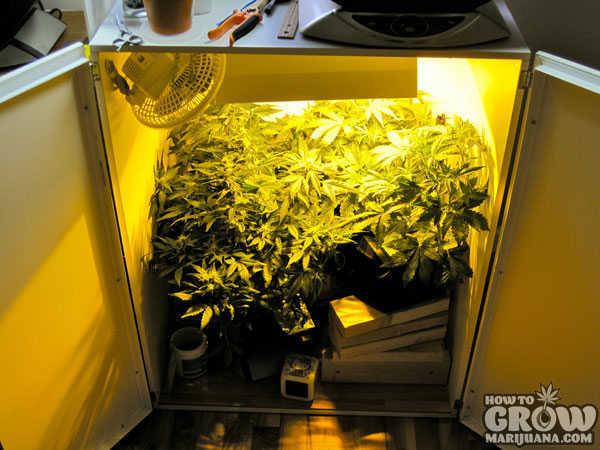 Quick Pro Marijuana Growers Checklist For Awesome Big Buds