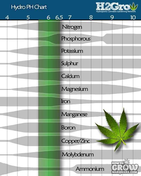 Marijuana Growing Seven Tips On How To Keep Growing Great