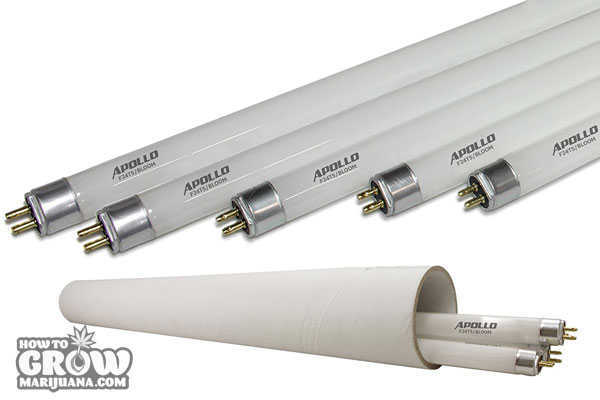 apollo-horticultire-t5-bulbs