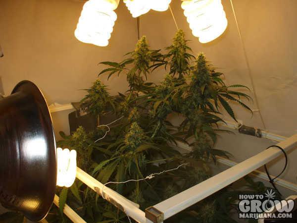 Compact Fluorescent Cfl Grow Lights