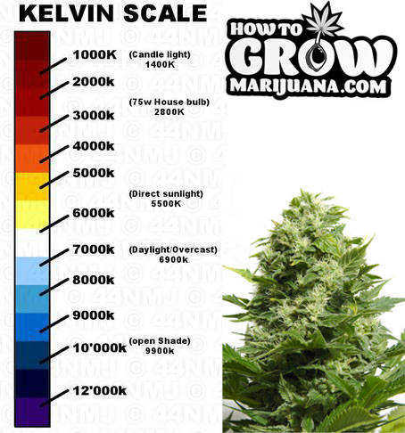How To Build A Grow Room