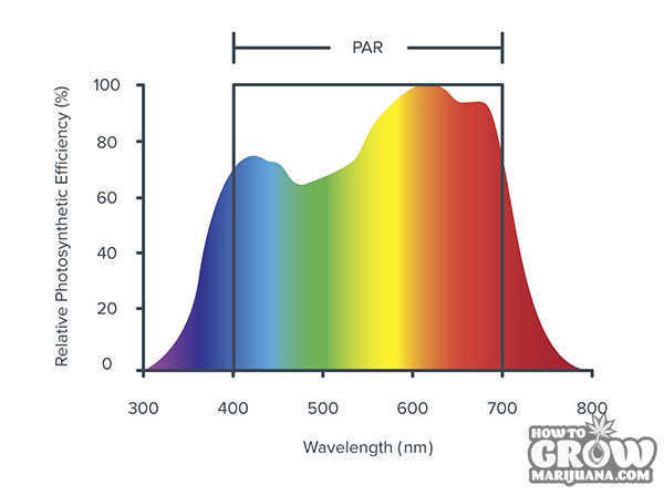 PAR response spectrum