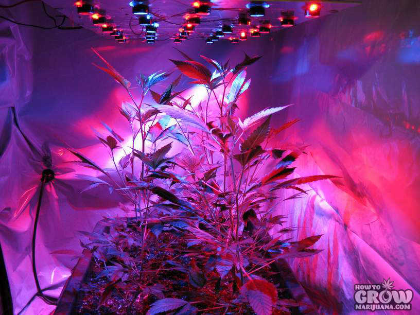 lighting-marijuana-plants