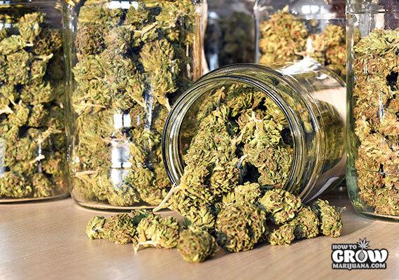 Cured Weed in Jars