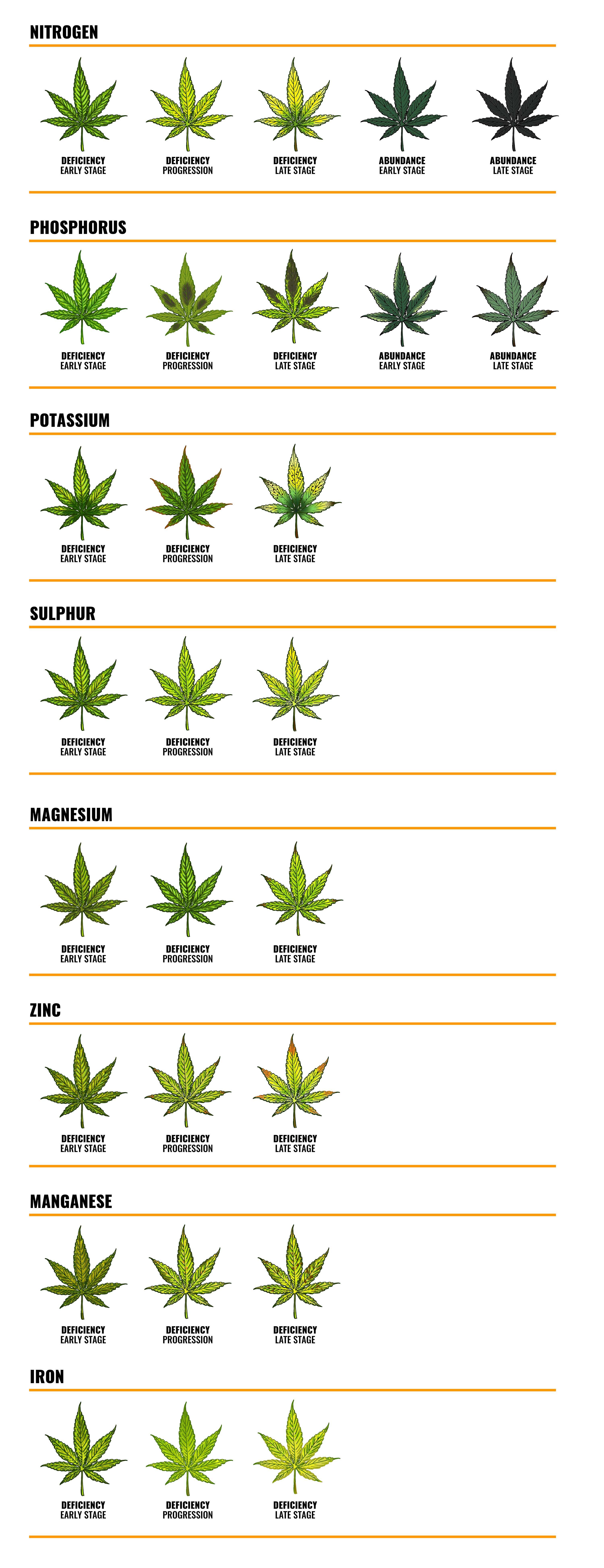 Nutrient deficiencies in marijuana