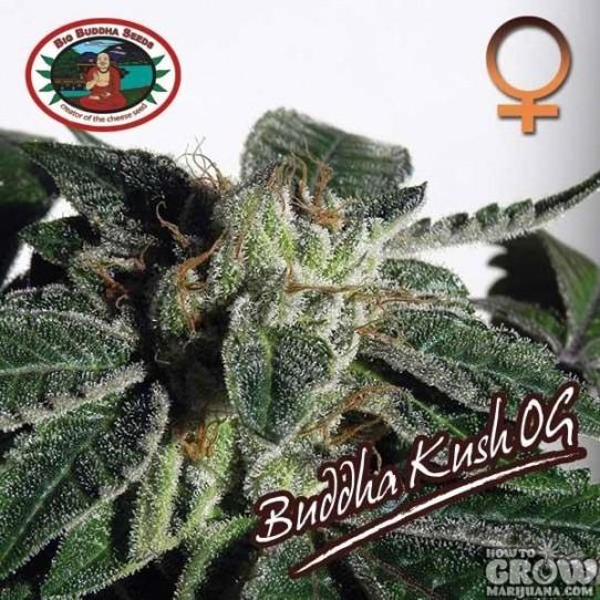 Buddha – Kush OG Feminized Seeds