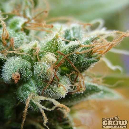BCN – Gadgetto Plant Automatic Seeds