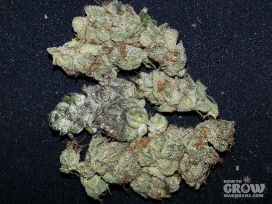 The Cookie Family – Girl Scout Cookies Seeds