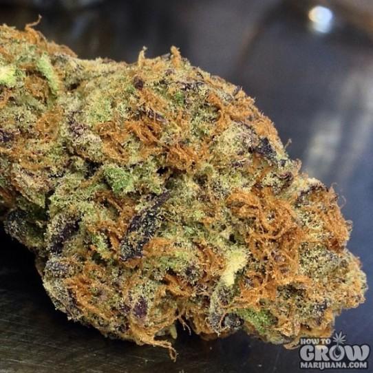 Kryptonite Marijuana Seeds