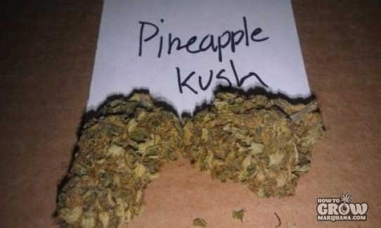 Royal Queen – Pineapple Kush Seeds