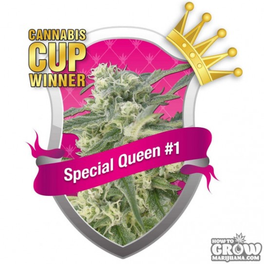 Royal Queen Special Queen No.1 Feminized Seeds