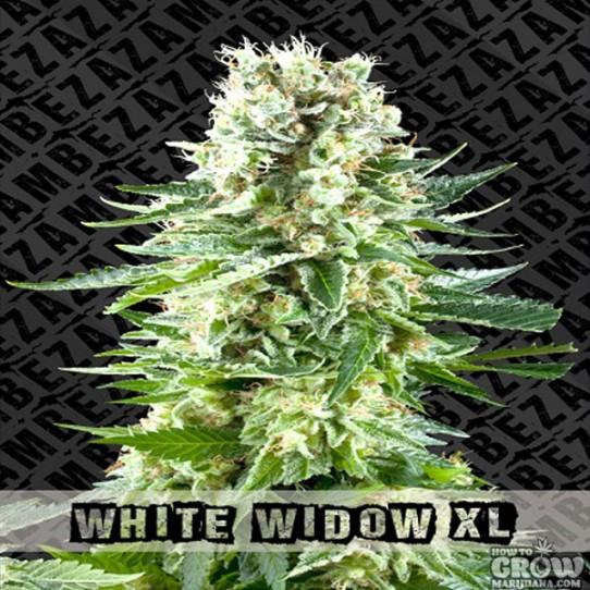 Zambeza – White Widow XL Feminized Seeds