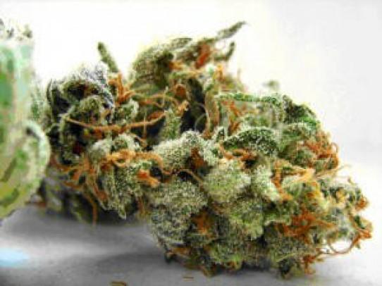 Amnesia Weed Seeds
