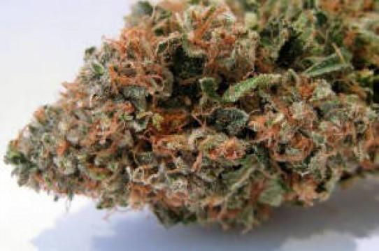 Cali Connection Tahoe OG Kush Marijuana Seeds