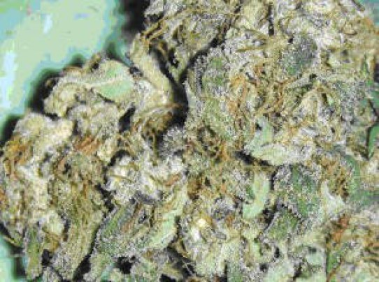Green House Chemdog Seeds